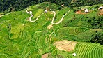 You'll never regret a visit to Vietnam's rice fields