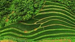 There's something quite special about Sapa's rice fields