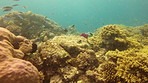 The beauty of coral reefs is worth fighting for
